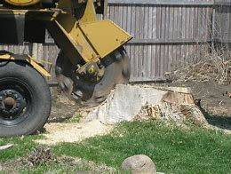 cheap tree stump removal Adelaide