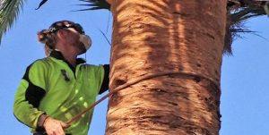 Palm Tree Removal